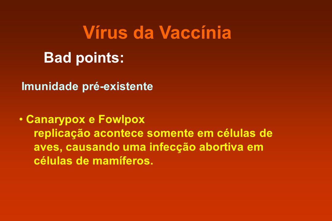 Vírus da Vaccínia Bad points: Imunidade pré-existente Canarypox e Fowlpox replicação acontece somente em células de aves, causando uma infecção aborti