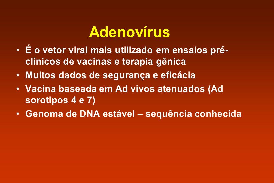 Adenovírus É o vetor viral mais utilizado em ensaios pré- clínicos de vacinas e terapia gênica Muitos dados de segurança e eficácia Vacina baseada em