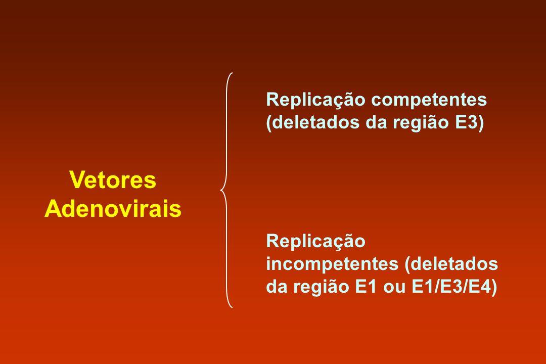Vetores Adenovirais Replicação competentes (deletados da região E3) Replicação incompetentes (deletados da região E1 ou E1/E3/E4)