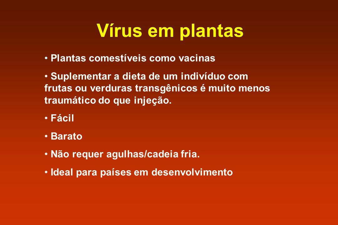 Vírus em plantas Plantas comestíveis como vacinas Suplementar a dieta de um indivíduo com frutas ou verduras transgênicos é muito menos traumático do