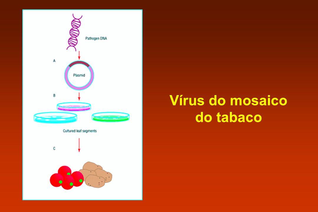 Vírus do mosaico do tabaco