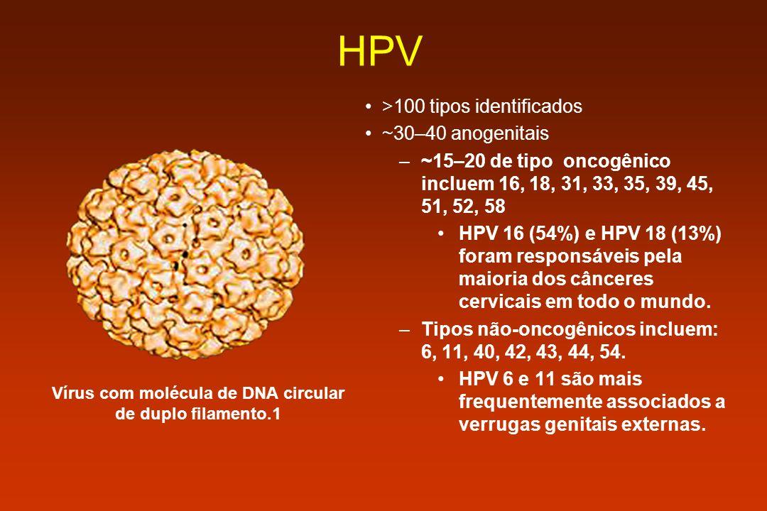 HPV >100 tipos identificados ~30–40 anogenitais –~15–20 de tipo oncogênico incluem 16, 18, 31, 33, 35, 39, 45, 51, 52, 58 HPV 16 (54%) e HPV 18 (13%)