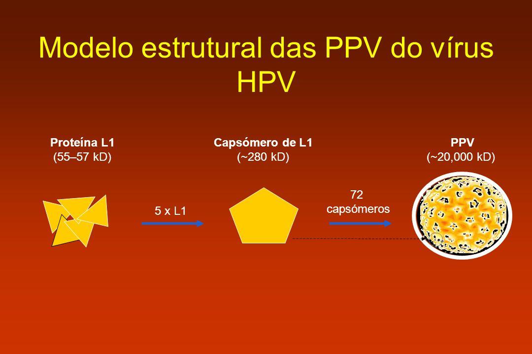 PPV (~20,000 kD) 72 capsómeros Capsómero de L1 (~280 kD) 5 x L1 Proteína L1 (55–57 kD) Modelo estrutural das PPV do vírus HPV