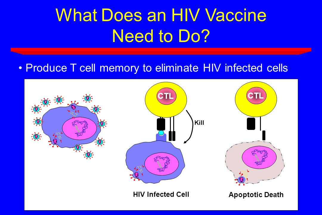 What Does an HIV Vaccine Need to Do? Produce T cell memory to eliminate HIV infected cells Kill HIV Infected Cell CTL Apoptotic Death