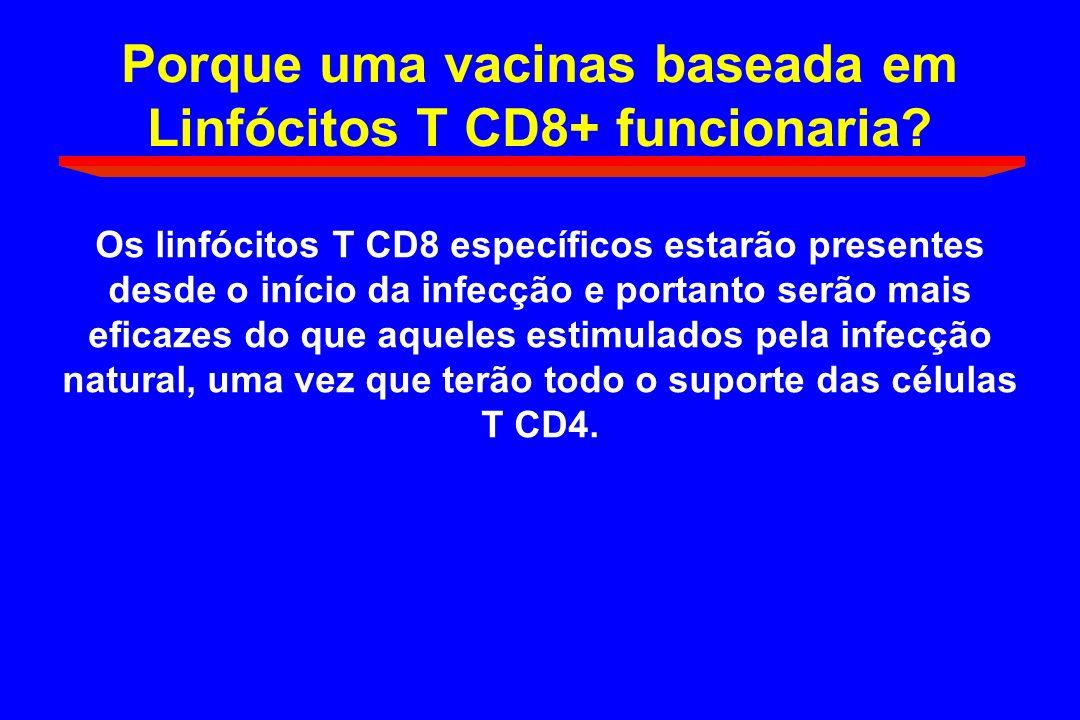 Porque uma vacinas baseada em Linfócitos T CD8+ funcionaria? Os linfócitos T CD8 específicos estarão presentes desde o início da infecção e portanto s
