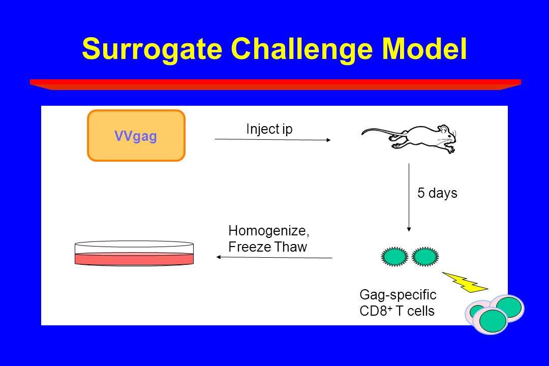 Surrogate Challenge Model VVgag Inject ip 5 days Homogenize, Freeze Thaw Gag-specific CD8 + T cells