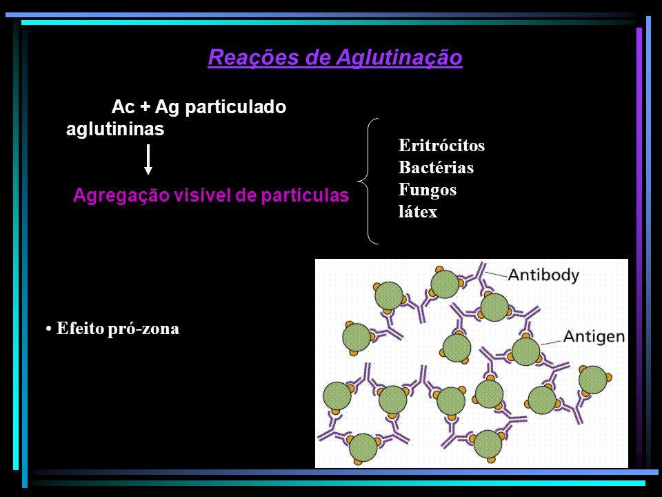 Reações de Aglutinação Ac + Ag particulado aglutininas Agregação visível de partículas Efeito pró-zona Eritrócitos Bactérias Fungos látex
