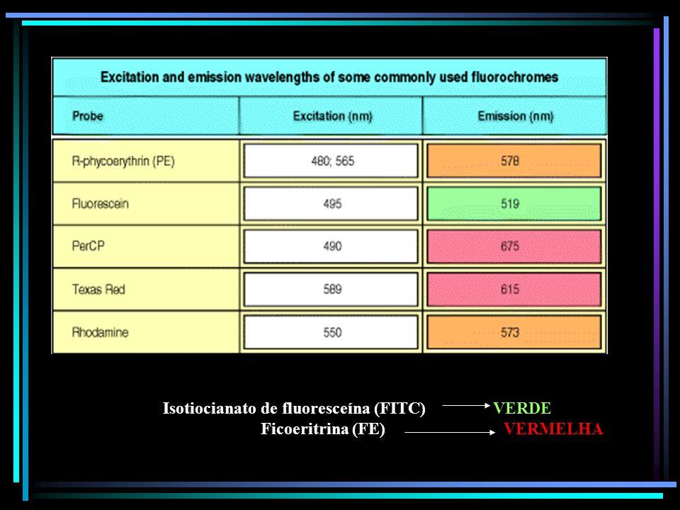 Isotiocianato de fluoresceína (FITC) VERDE Ficoeritrina (FE) VERMELHA