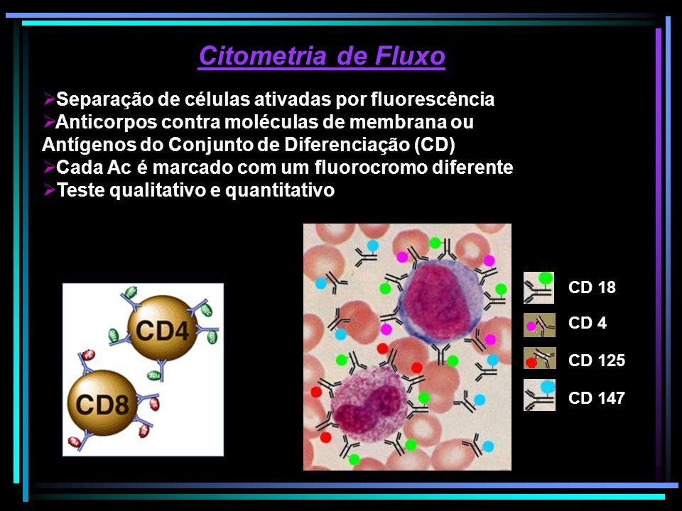 Citometria de Fluxo Separação de células ativadas por fluorescência Anticorpos contra moléculas de membrana ou Antígenos do Conjunto de Diferenciação