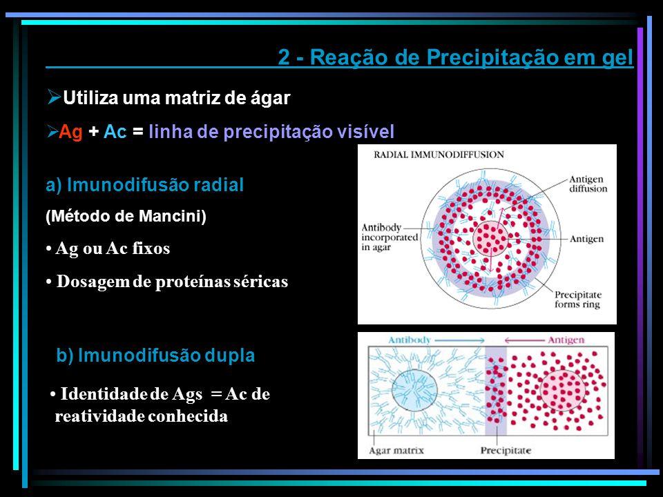 2 - Reação de Precipitação em gel Utiliza uma matriz de ágar Ag + Ac = linha de precipitação visível a) Imunodifusão radial (Método de Mancini) Ag ou