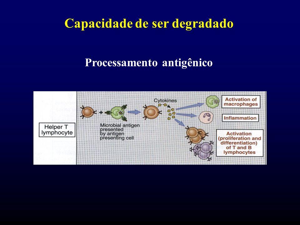 Capacidade de ser degradado Processamento antigênico