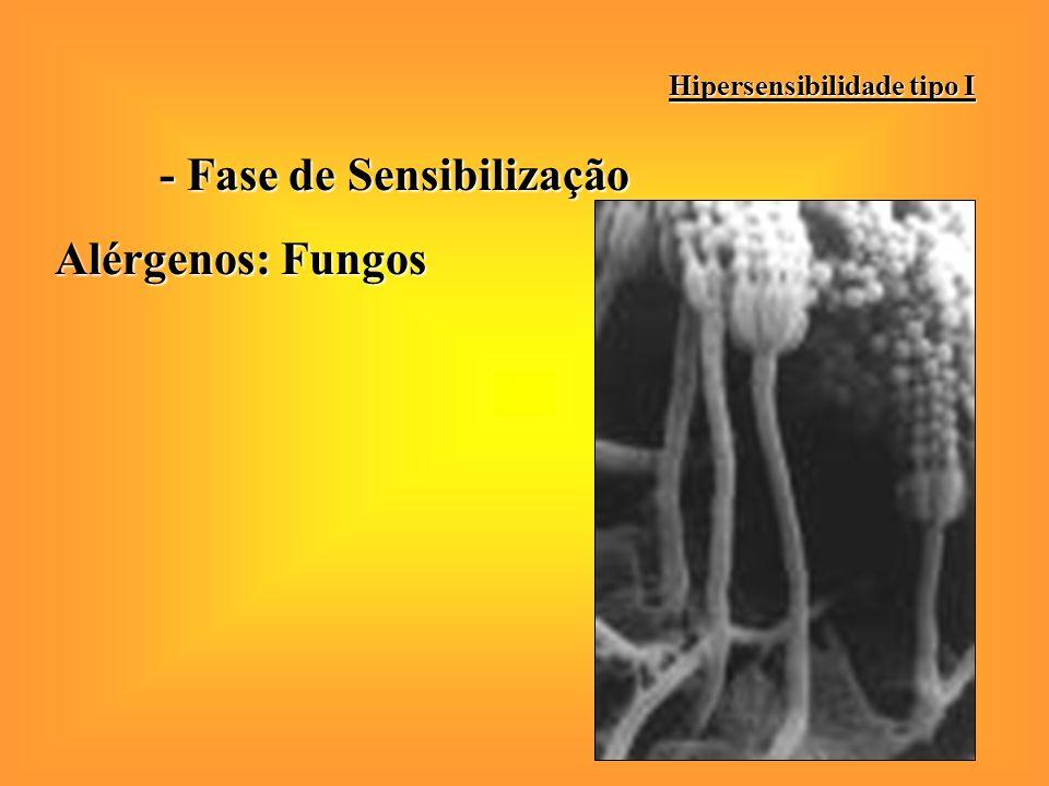 - Fase de Sensibilização Alérgenos: Pelo de animais Hipersensibilidade tipo I