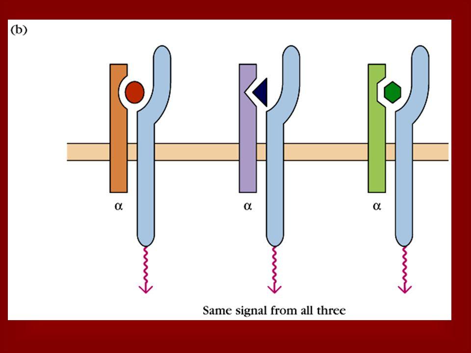 Propriedades Gerais A ação de uma citocina pode interferir na ação de outra