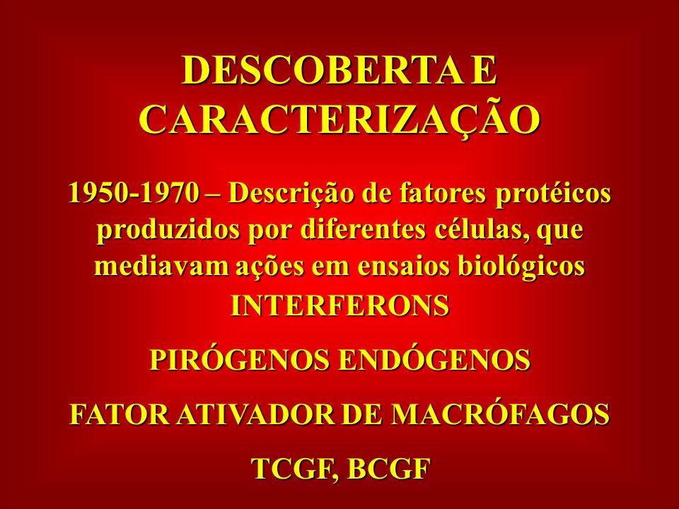DESCOBERTA E CARACTERIZAÇÃO 1950-1970 – Descrição de fatores protéicos produzidos por diferentes células, que mediavam ações em ensaios biológicos INTERFERONS PIRÓGENOS ENDÓGENOS FATOR ATIVADOR DE MACRÓFAGOS TCGF, BCGF