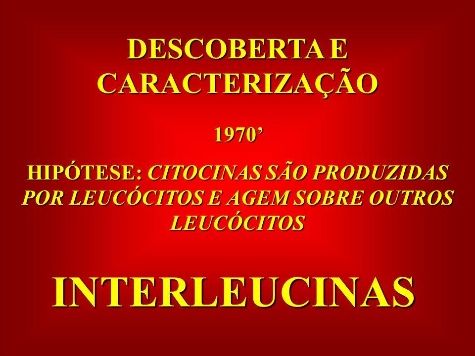 DESCOBERTA E CARACTERIZAÇÃO 1970 HIPÓTESE: CITOCINAS SÃO PRODUZIDAS POR LEUCÓCITOS E AGEM SOBRE OUTROS LEUCÓCITOS INTERLEUCINAS