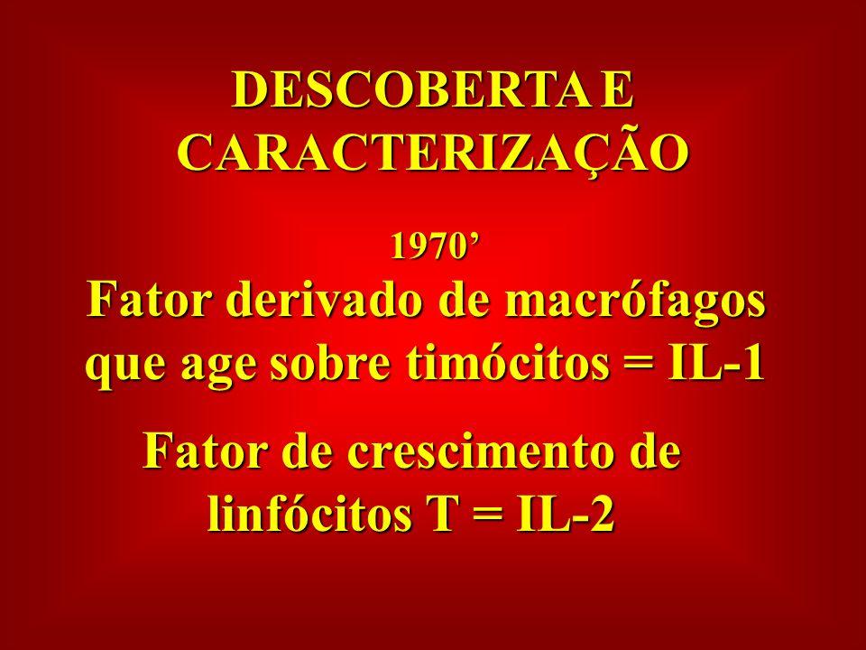 DESCOBERTA E CARACTERIZAÇÃO 1970 Fator derivado de macrófagos que age sobre timócitos = IL-1 Fator de crescimento de linfócitos T = IL-2