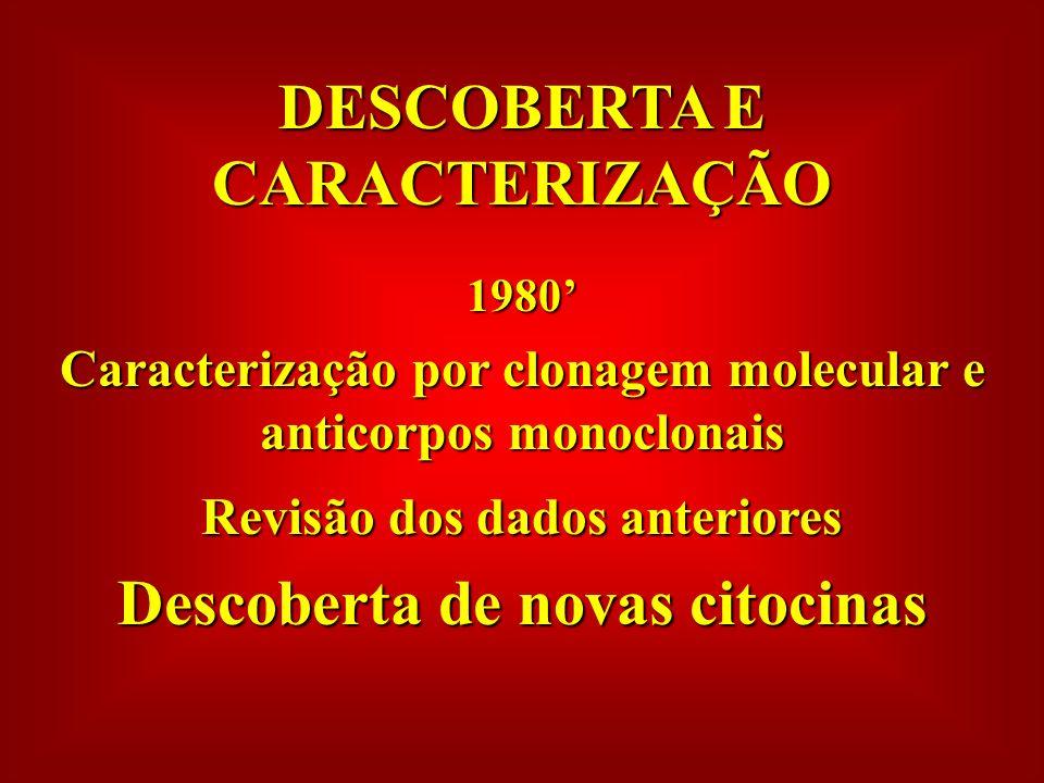DESCOBERTA E CARACTERIZAÇÃO 1980 Caracterização por clonagem molecular e anticorpos monoclonais Revisão dos dados anteriores Descoberta de novas citocinas