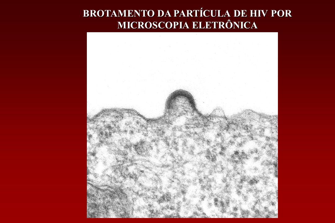 1983 O vírus da imunodeficiência humana (HIV) foi reconhecido como o agente causador da AIDS Em 1983 e 1984 Dois grupos de pesquisadores liderados por