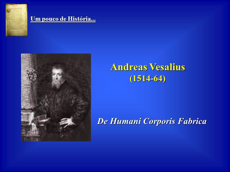 Um pouco de História... Um pouco de História... Cláudio Galeno (130-201) Pai da vivissecção Pai da vivissecção