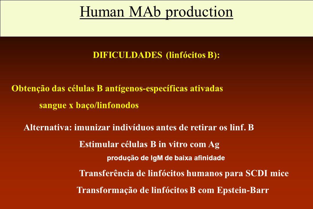 Anticorpos monoclonais humanos DIFICULDADES (linfócitos B): Obtenção das células B antígenos-específicas ativadas sangue x baço/linfonodos Alternativa