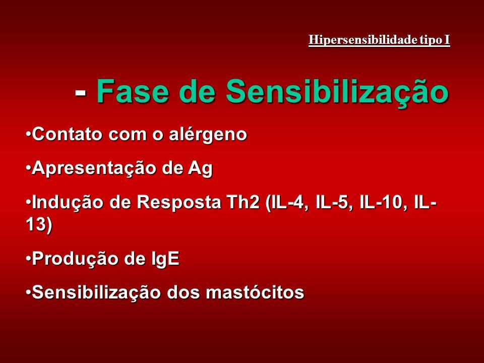- Fase de Sensibilização Contato com o alérgenoContato com o alérgeno Apresentação de AgApresentação de Ag Indução de Resposta Th2 (IL-4, IL-5, IL-10, IL- 13)Indução de Resposta Th2 (IL-4, IL-5, IL-10, IL- 13) Produção de IgEProdução de IgE Sensibilização dos mastócitosSensibilização dos mastócitos Hipersensibilidade tipo I