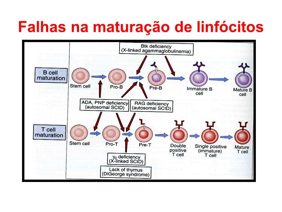 Falhas na maturação de linfócitos