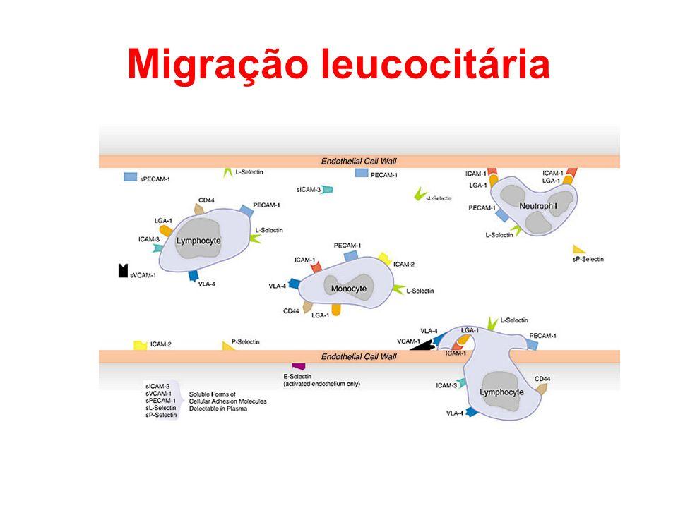 Migração leucocitária