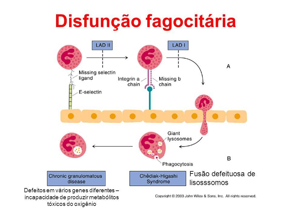 Disfunção fagocitária Fusão defeituosa de lisosssomos Defeitos em vários genes diferentes – incapacidade de produzir metabólitos tóxicos do oxigênio