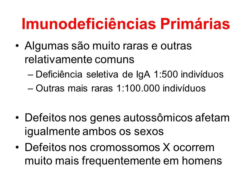 Imunodeficiências Primárias Algumas são muito raras e outras relativamente comuns –Deficiência seletiva de IgA 1:500 indivíduos –Outras mais raras 1:1