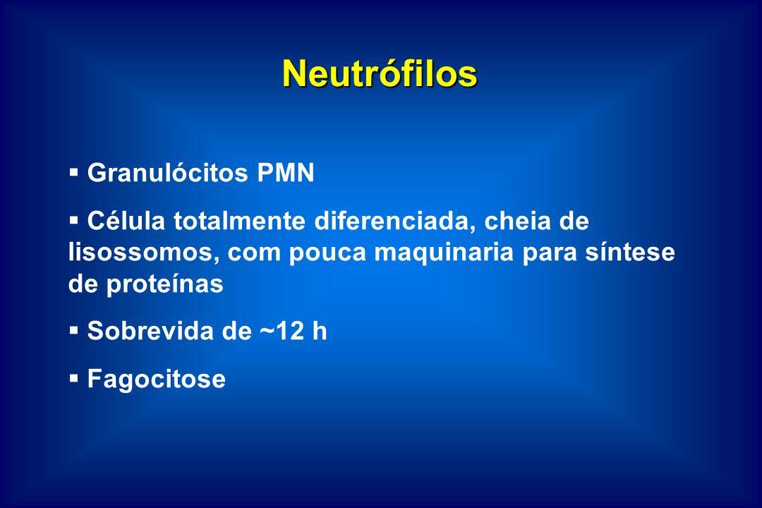 Neutrófilos Granulócitos PMN Célula totalmente diferenciada, cheia de lisossomos, com pouca maquinaria para síntese de proteínas Sobrevida de ~12 h Fa