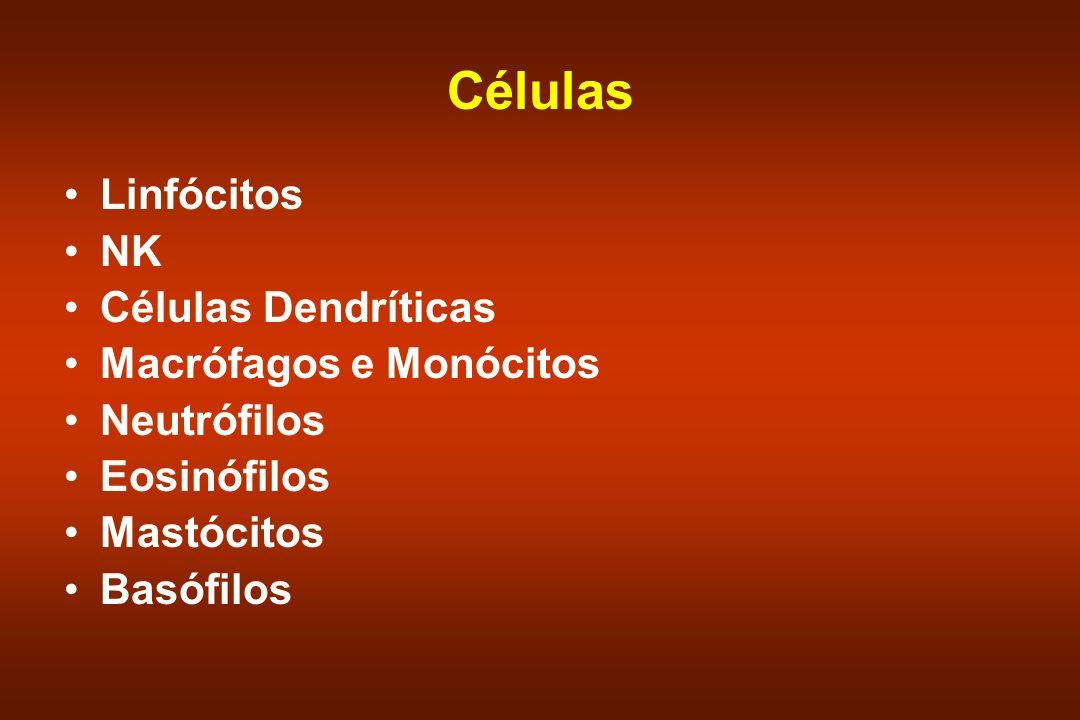 Linfócitos São as únicas células com receptores específicos para antígenos –Chaves da imunidade adaptável.