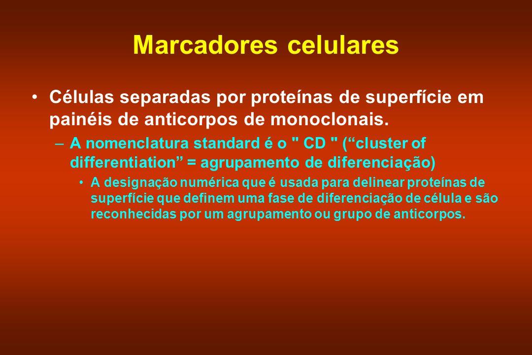 Marcadores celulares Células separadas por proteínas de superfície em painéis de anticorpos de monoclonais. –A nomenclatura standard é o