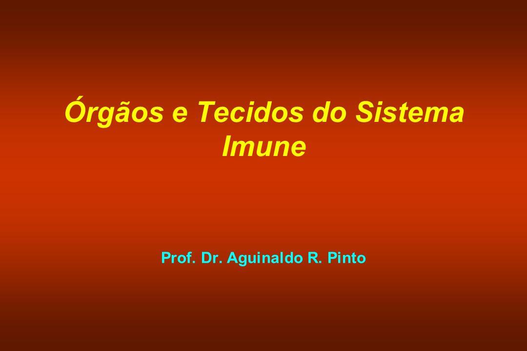 Órgãos e Tecidos do Sistema Imune Prof. Dr. Aguinaldo R. Pinto
