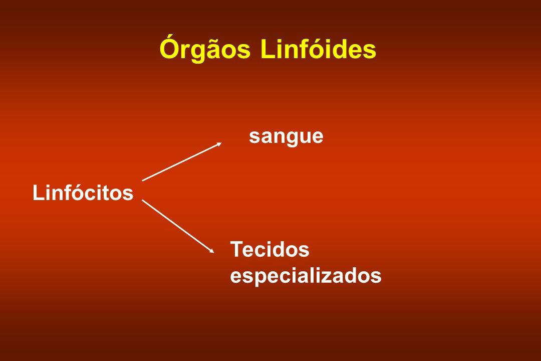 Órgãos Linfóides Linfócitos sangue Tecidos especializados