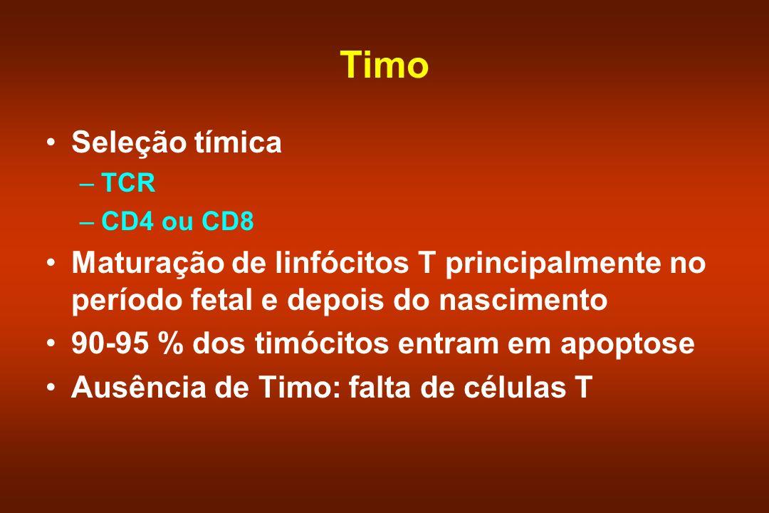Timo Seleção tímica –TCR –CD4 ou CD8 Maturação de linfócitos T principalmente no período fetal e depois do nascimento 90-95 % dos timócitos entram em