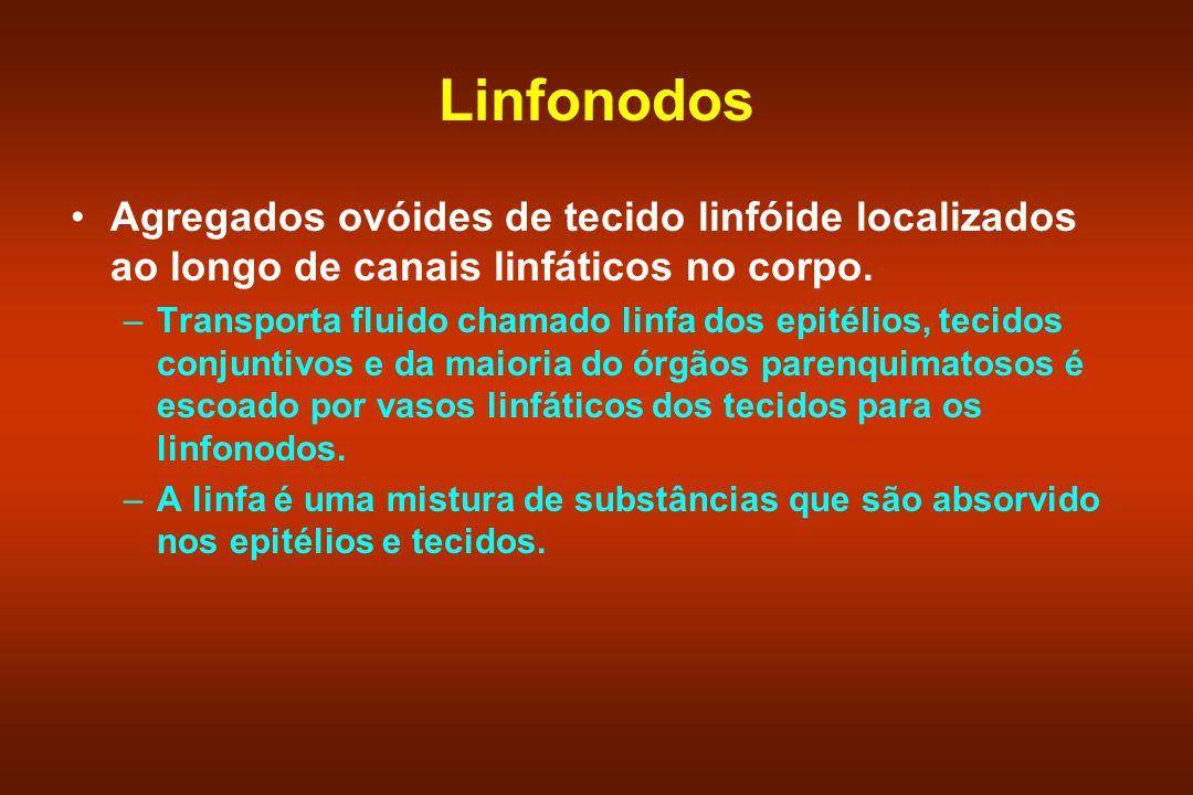Linfonodos Agregados ovóides de tecido linfóide localizados ao longo de canais linfáticos no corpo. –Transporta fluido chamado linfa dos epitélios, te