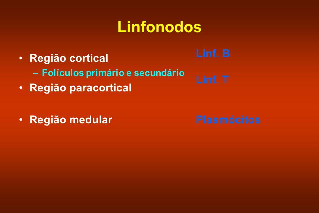 Linfonodos Região cortical –Folículos primário e secundário Região paracortical Região medular Linf. B Linf. T Plasmócitos