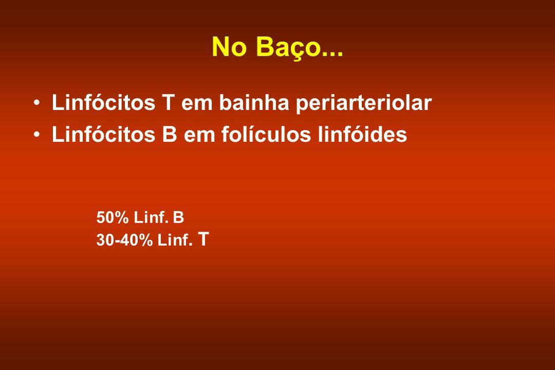 No Baço... Linfócitos T em bainha periarteriolar Linfócitos B em folículos linfóides 50% Linf. B 30-40% Linf. T