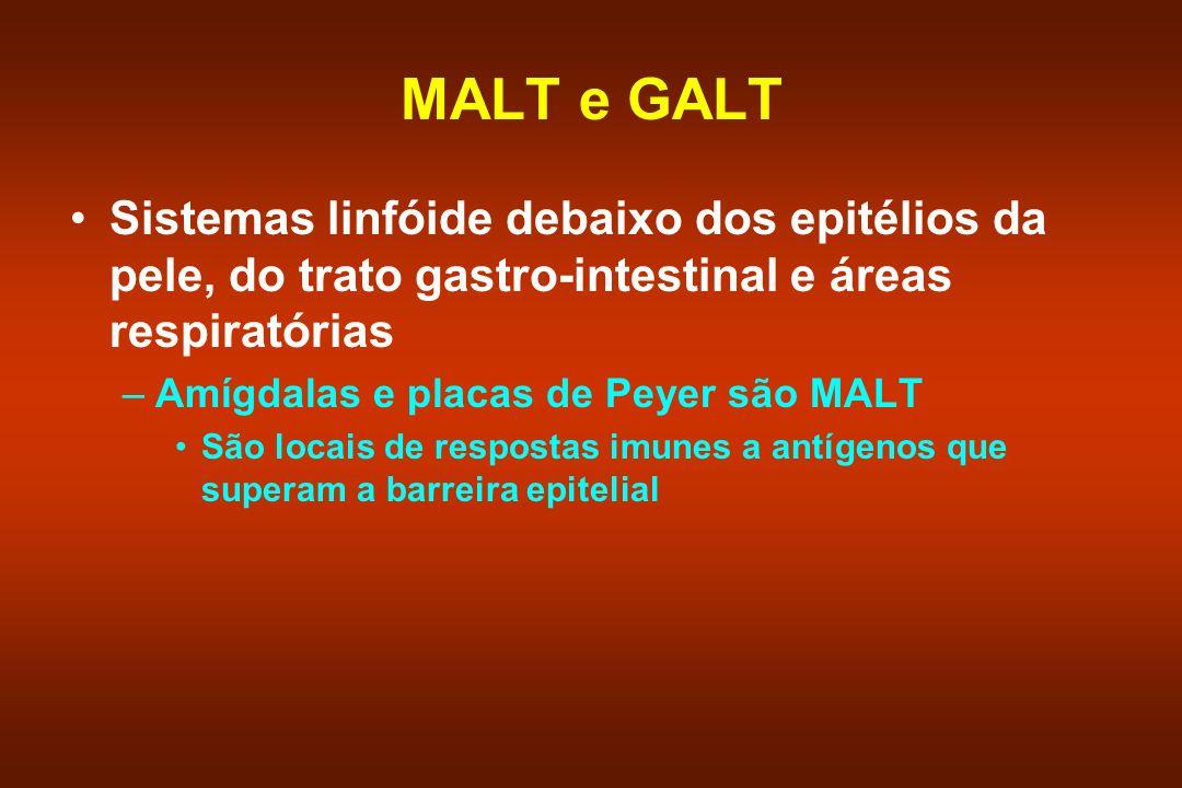 MALT e GALT Sistemas linfóide debaixo dos epitélios da pele, do trato gastro-intestinal e áreas respiratórias –Amígdalas e placas de Peyer são MALT Sã