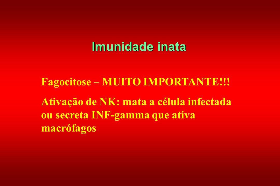 Imunidade inata Fagocitose – MUITO IMPORTANTE!!! Ativação de NK: mata a célula infectada ou secreta INF-gamma que ativa macrófagos