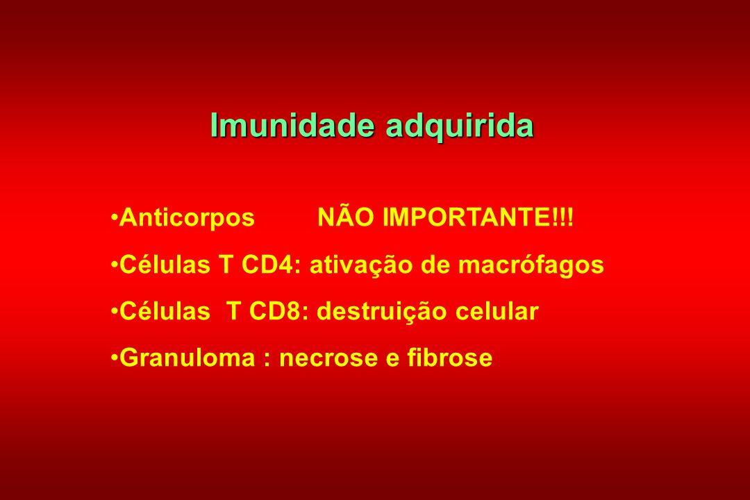 Imunidade adquirida Anticorpos NÃO IMPORTANTE!!! Células T CD4: ativação de macrófagos Células T CD8: destruição celular Granuloma : necrose e fibrose