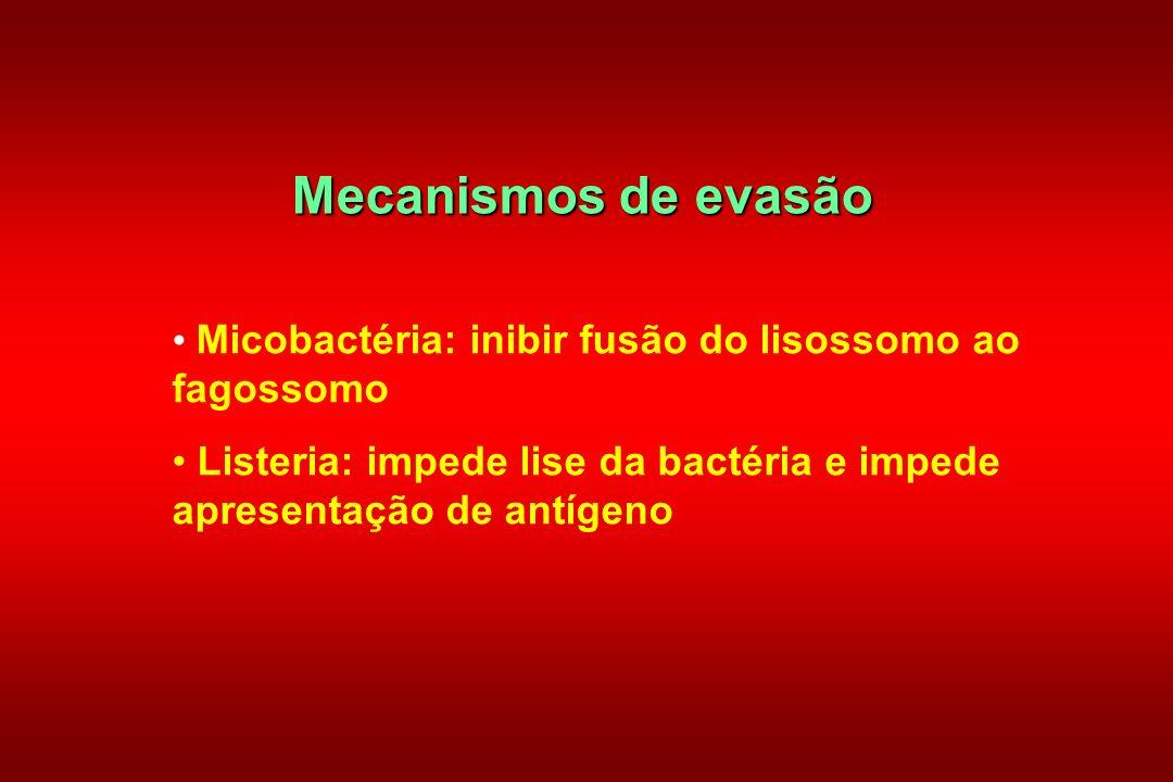 Mecanismos de evasão Micobactéria: inibir fusão do lisossomo ao fagossomo Listeria: impede lise da bactéria e impede apresentação de antígeno