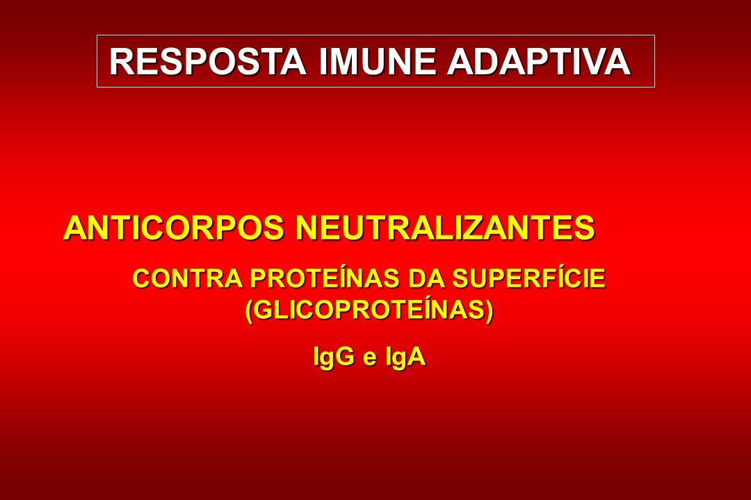 ANTICORPOS NEUTRALIZANTES CONTRA PROTEÍNAS DA SUPERFÍCIE (GLICOPROTEÍNAS) IgG e IgA