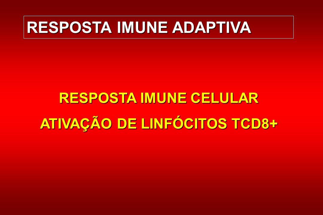 RESPOSTA IMUNE ADAPTIVA RESPOSTA IMUNE CELULAR ATIVAÇÃO DE LINFÓCITOS TCD8+