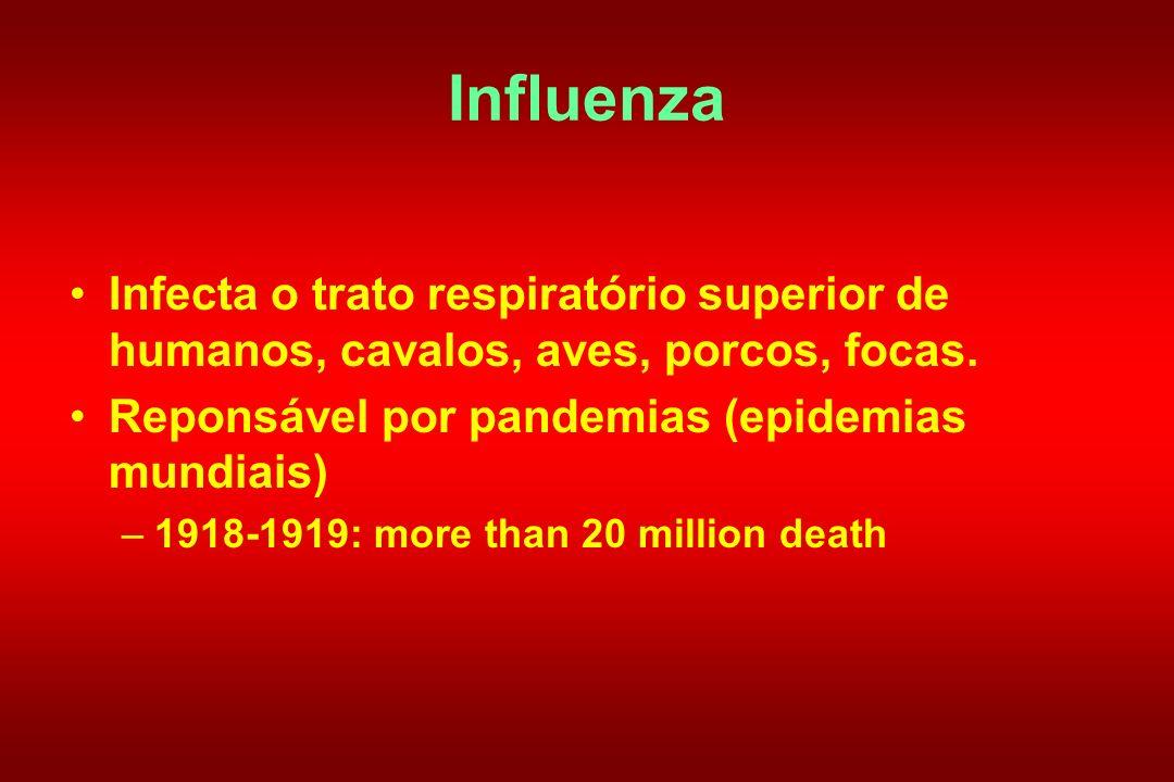 Influenza Infecta o trato respiratório superior de humanos, cavalos, aves, porcos, focas. Reponsável por pandemias (epidemias mundiais) –1918-1919: mo