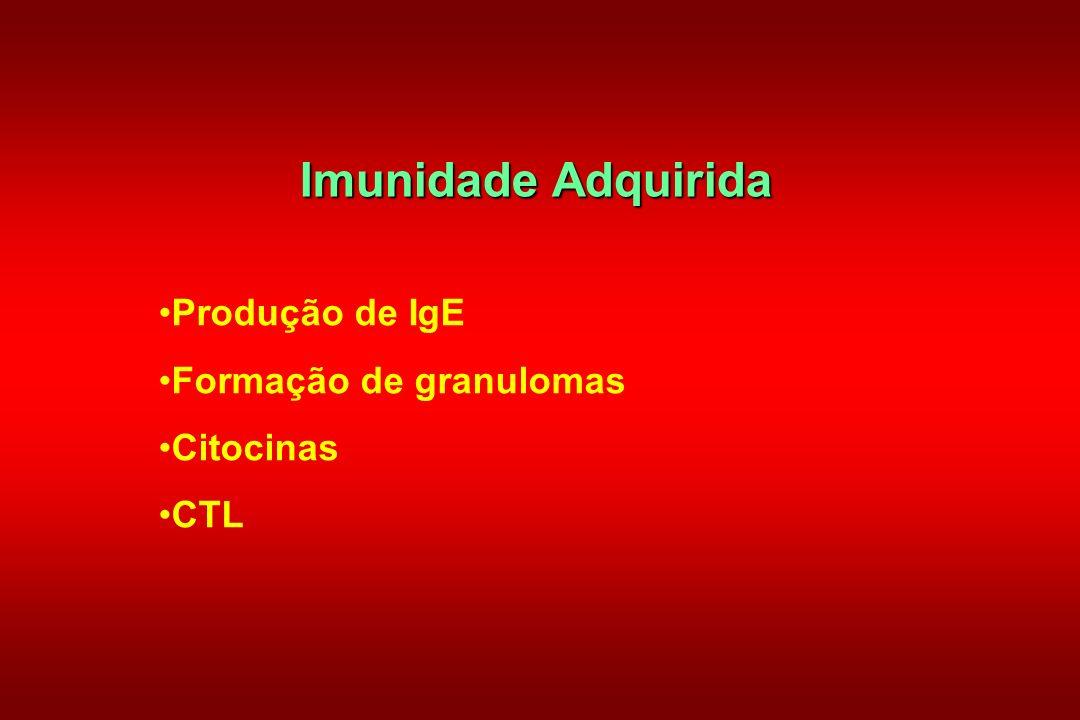 Imunidade Adquirida Produção de IgE Formação de granulomas Citocinas CTL
