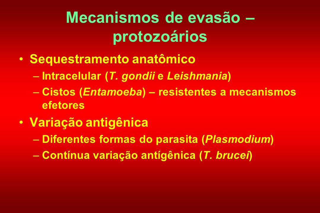 Mecanismos de evasão – protozoários Sequestramento anatômico –Intracelular (T. gondii e Leishmania) –Cistos (Entamoeba) – resistentes a mecanismos efe