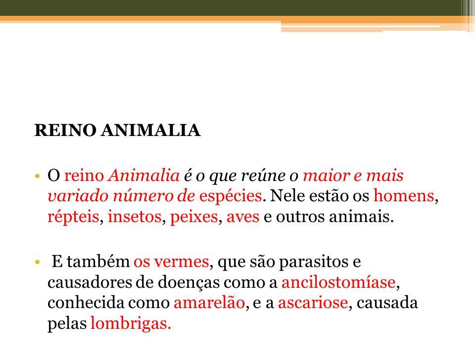 REINO ANIMALIA O reino Animalia é o que reúne o maior e mais variado número de espécies. Nele estão os homens, répteis, insetos, peixes, aves e outros