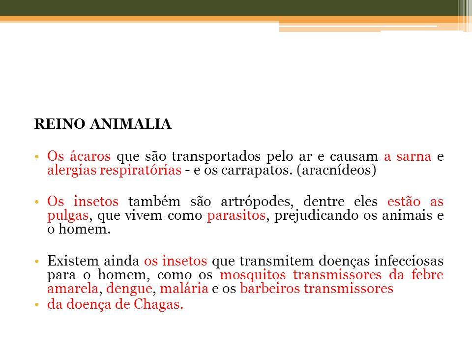 REINO ANIMALIA Os ácaros que são transportados pelo ar e causam a sarna e alergias respiratórias - e os carrapatos. (aracnídeos) Os insetos também são