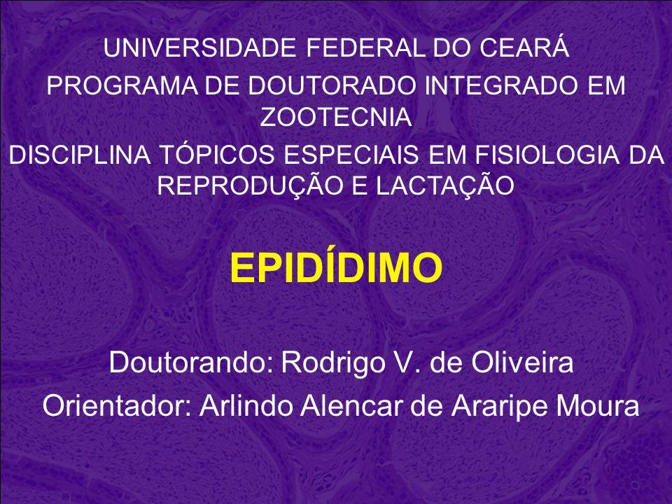 EPIDÍDIMO Doutorando: Rodrigo V. de Oliveira Orientador: Arlindo Alencar de Araripe Moura UNIVERSIDADE FEDERAL DO CEARÁ PROGRAMA DE DOUTORADO INTEGRAD